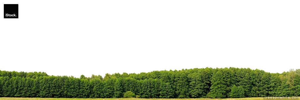 Edge of a wood isolated on white, hugeresolution. (Alnus glutino