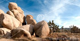 Rock formation at Joshua Tree National Park.