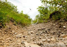 Low angle view of stony path for downhill mountain biking.