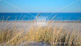 Grass on Beach Dunes along Baltic Sea at sunset.