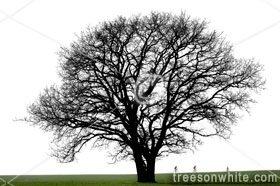 Black Trees Isolated On White.