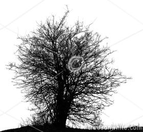 Black Trees Isolated On White.