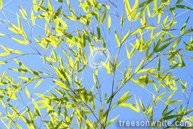 Plant Close-Ups: Details of Nature.