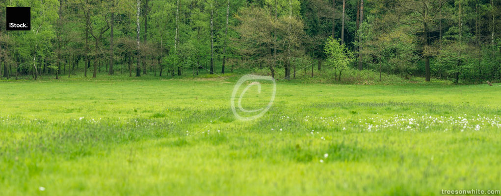 Meadow in front of a mixed european forest in spring.