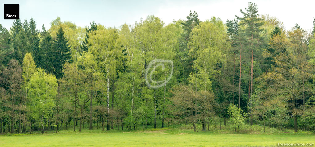 Edge of a mixed european forest in spring.