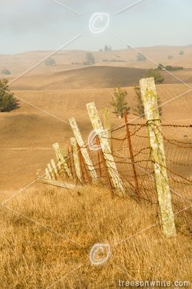 Weathered wire fence on ranch.