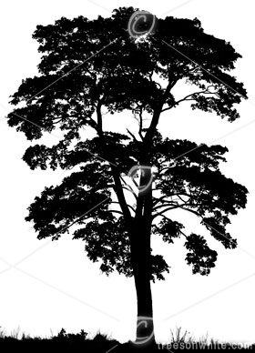 Black Trees Isolated On White Trees On White Trees On White