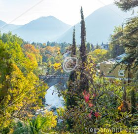 Innsbruck, South Tyrol (Trentino) and the City of Merano