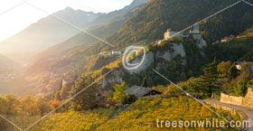 Castle Tyrol above the city of Merano (Italy) at sunset in autumn (November). Vine Yards visible in the foreground. On the lower left side of the photo, the older 'Brunnenburg' is partly visible behind trees.