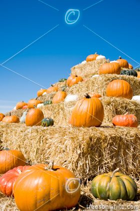 Pumpkins on bales of straw.