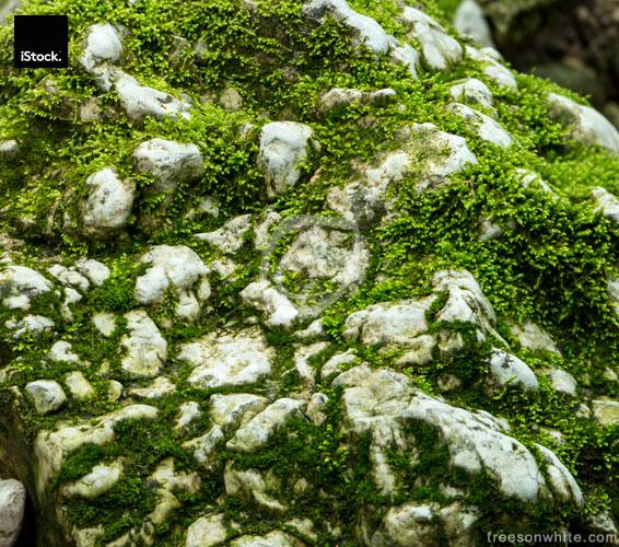 Moss covered limestone in Verenaschlucht, Solothurn, Switzerland