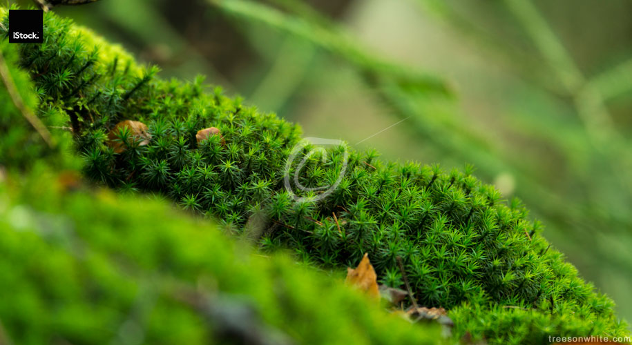 Moss covered Forest floor background close-up.